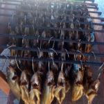 wedzenie-ryb